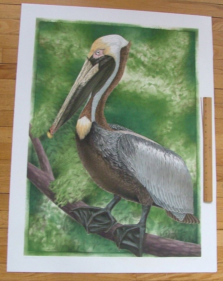 Brown Pelican, an original copper plate engraving from the collection of twenty Birds of Florida. 1/250 signed by John Costin. John Costin.