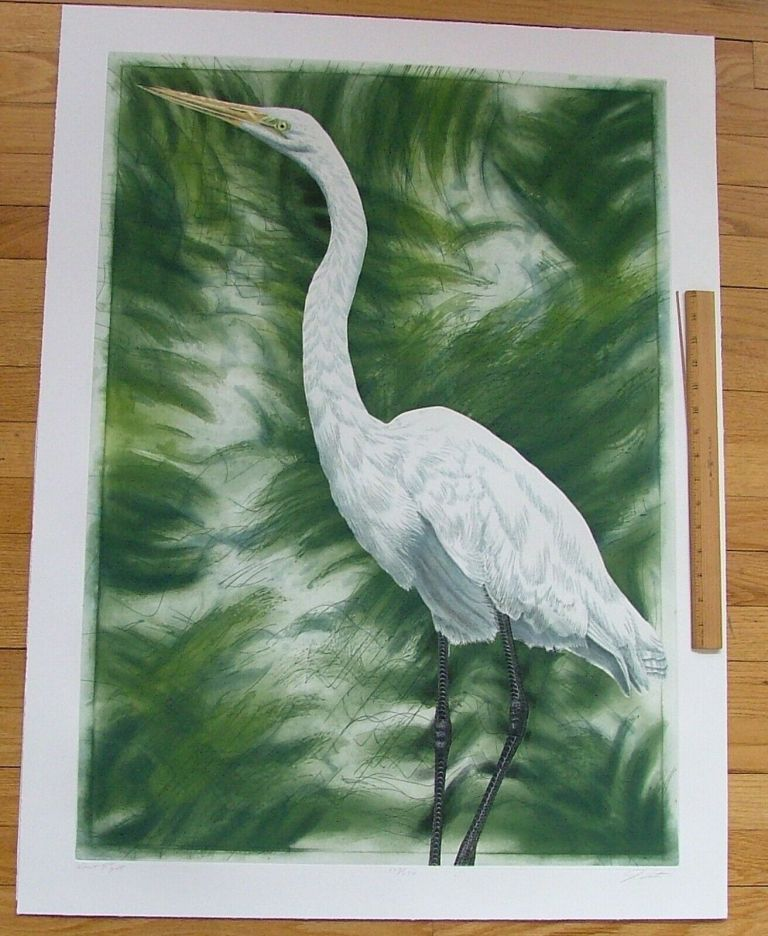 Great Egret, an original copper plate engraving from the collection of twenty Birds of Florida. 1/250 signed by John Costin. John Costin.