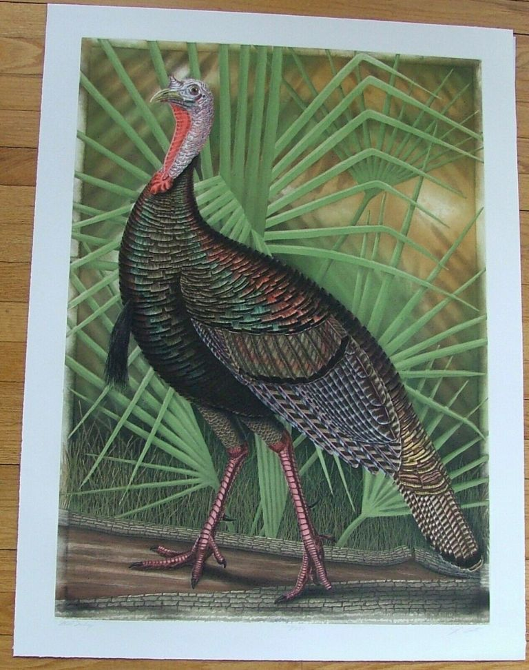 Wild Turkey, an original copper plate engraving from the collection of twenty Birds of Florida. 1/250 signed by John Costin. John Costin.