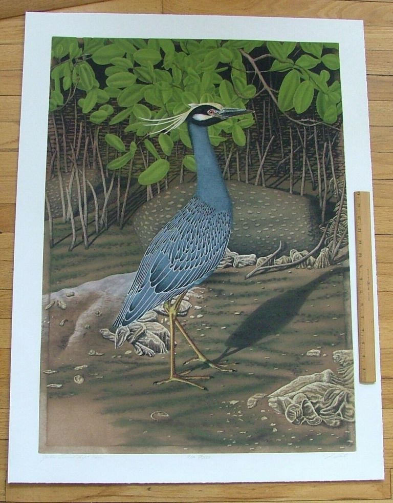 Yellow Crowned Night Heron, an original copper plate engraving from the collection of twenty Birds of Florida. 1/250 signed by John Costin. John Costin.