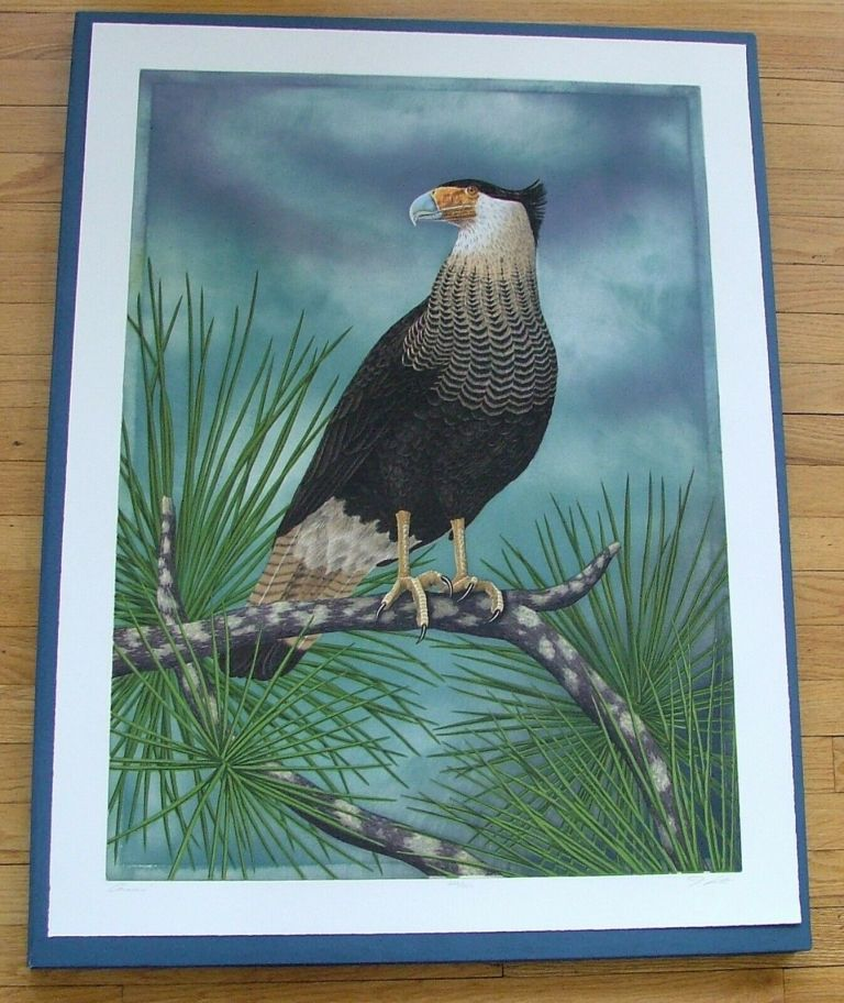 Caracara, an original copper plate engraving from the collection of twenty Birds of Florida. 1/100 signed by John Costin. John Costin.