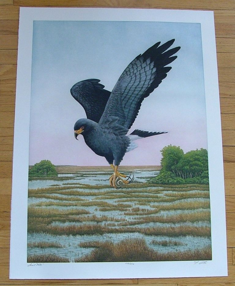 Snail Kite, an original copper plate engraving from the collection of twenty Birds of Florida. 1/100 signed by John Costin. John Costin.