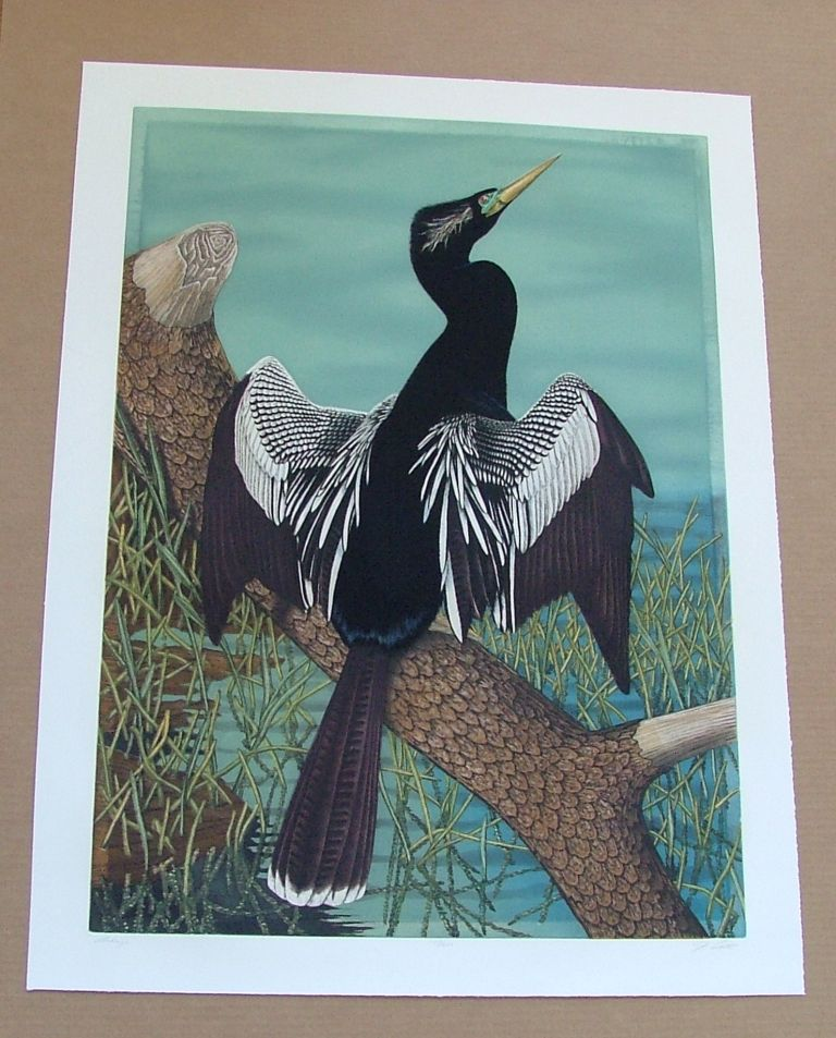 Anhinga, an original copper plate engraving from the collection of twenty Birds of Florida. 1/250 signed by John Costin. John Costin.