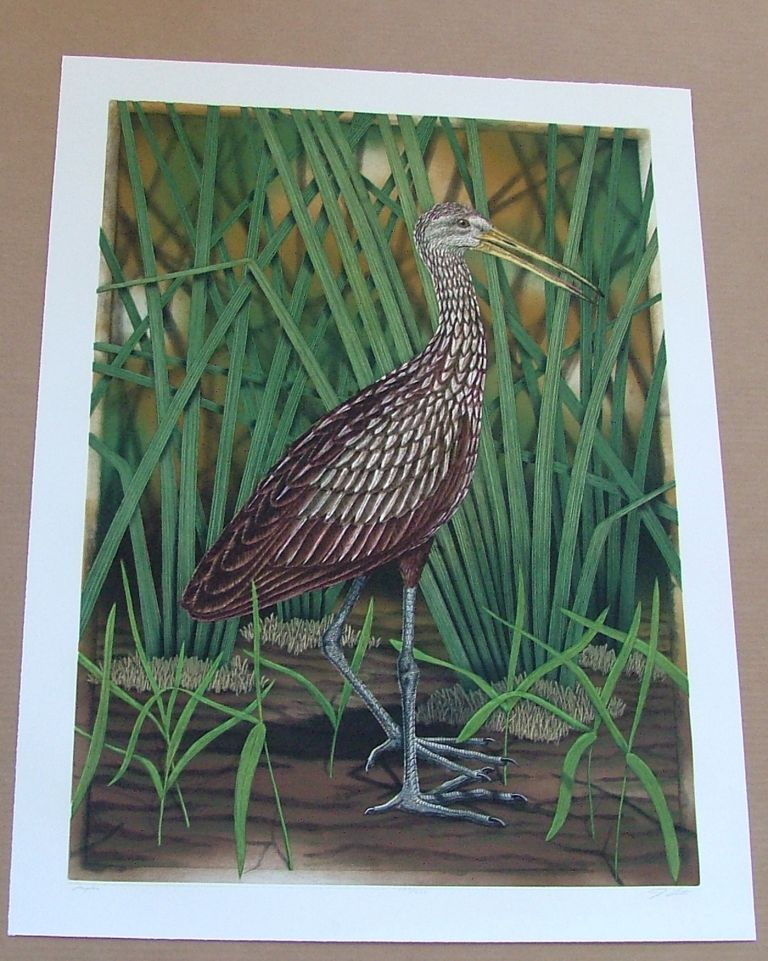 Limpkin, an original copper plate engraving from the collection of twenty Birds of Florida. 1/250 signed by John Costin. John Costin.