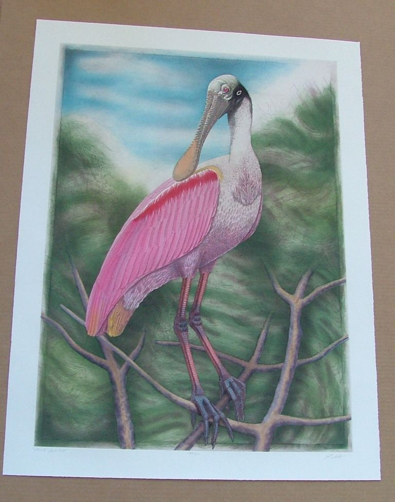 Spoonbill, an original copper plate engraving from the collection of twenty Birds of Florida. 1/250 signed by John Costin. John Costin.