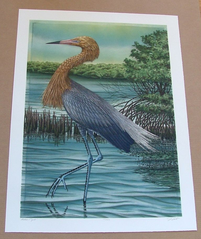 Reddish Egret, an original copper plate engraving from the collection of twenty Birds of Florida. 1/250 signed by John Costin. John Costin.