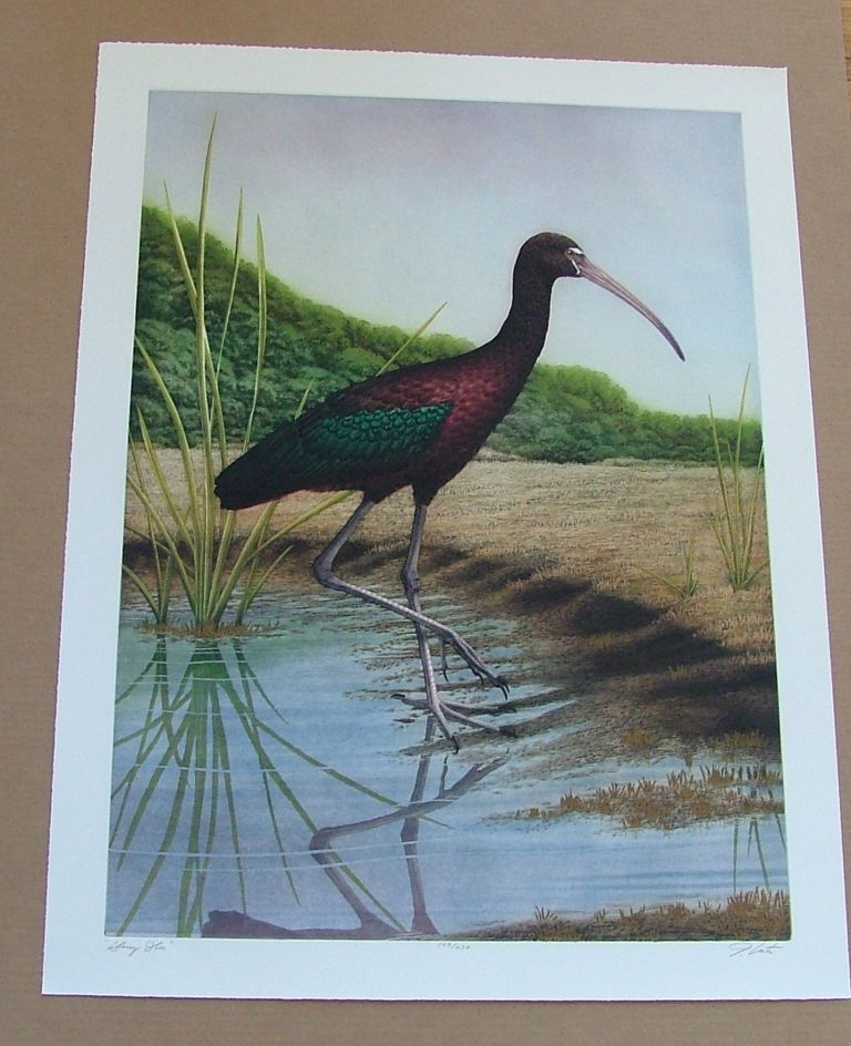 Glossy Ibis, an original copper plate engraving from the collection of twenty Birds of Florida. 1/250 signed by John Costin. John Costin.