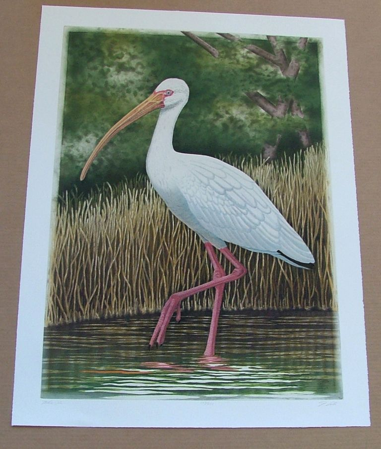 White Ibis, an original copper plate engraving from the collection of twenty Birds of Florida. 1/250 signed by John Costin. John Costin.