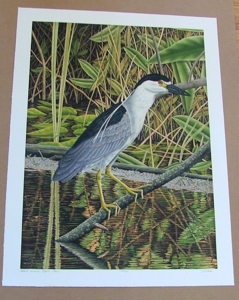 Black Crowned Night Heron, an original copper plate engraving from the collection of twenty Birds of Florida. 1/250 signed by John Costin. John Costin.
