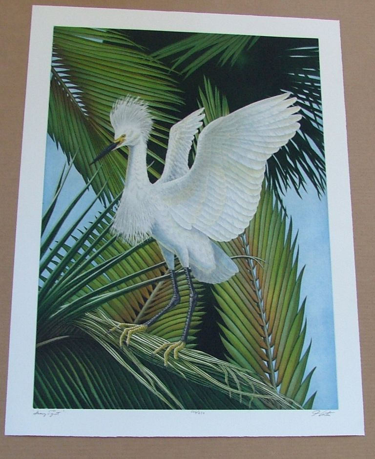 Snowy Egret, an original copper plate engraving from the collection of twenty Birds of Florida. 1/250 signed by John Costin. John Costin.