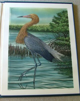 Large Florida Birds - A Suite of 20 Original Hand-Colored Etchings. John Costin