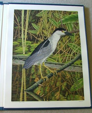 Large Florida Birds - A Suite of 20 Original Hand-Colored Etchings