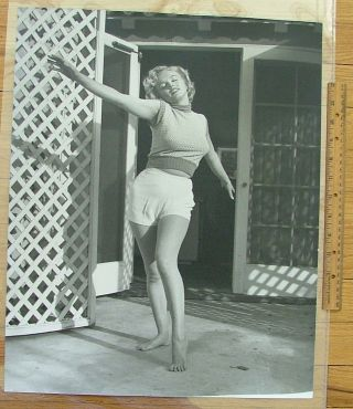 "Marilyn Monroe 16""x 20"" Matte-Finish Photo by Dienes Portrait Actress"