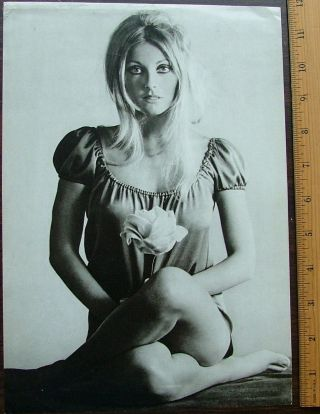 "Sharon Tate glamor shot, 8"" x 11-3/4"" single weight photo offset reproduction, circa 1967"