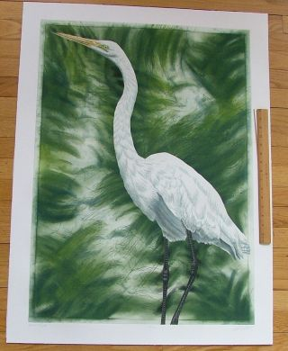 Great Egret, an original copper plate engraving from the collection of twenty Birds of Florida....