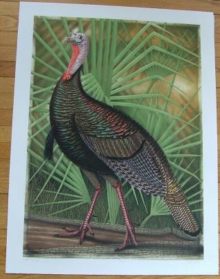 Wild Turkey, an original copper plate engraving from the collection of twenty Birds of Florida. 1/250 signed by John Costin