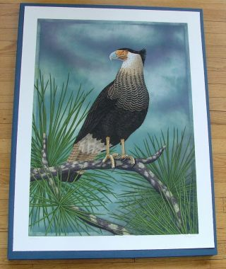 Caracara, an original copper plate engraving from the collection of twenty Birds of Florida....