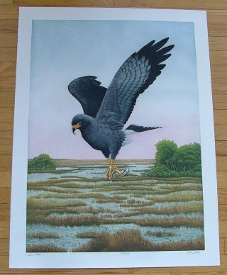Snail Kite, an original copper plate engraving from the collection of twenty Birds of Florida....