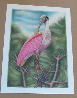 Spoonbill, an original copper plate engraving from the collection of twenty Birds of Florida....