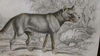 The Naturalist's Library Conducted by Sir William Jardine, Bart. Mammalia Vol. IX DOGS. Canidae or Genus Canis of Authors. Including also the Genera Hyaena and Proteles.